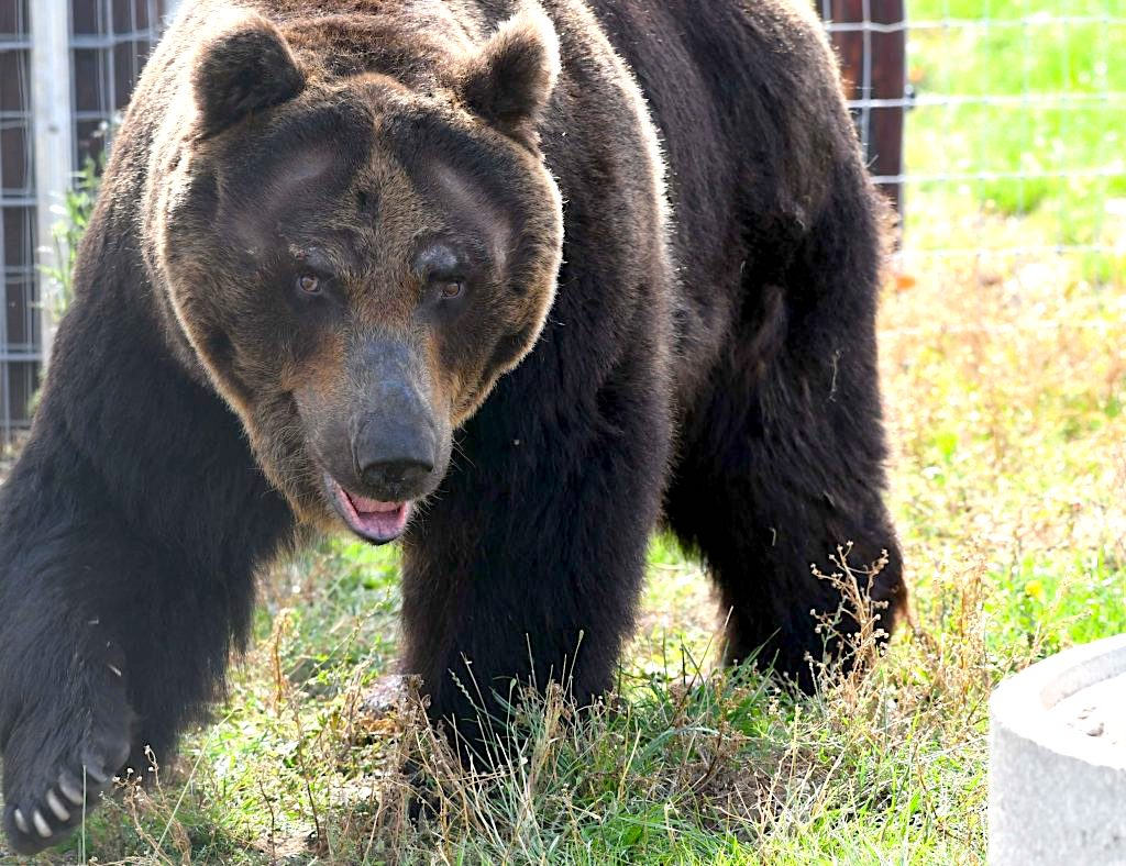 DHL Global Forwarding gives Hokkaido grizzlies a lift to new UK home