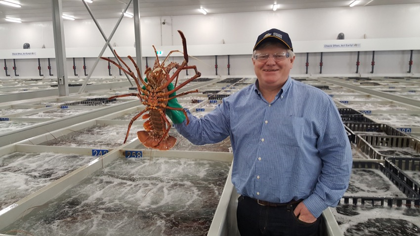 Tigers anticipates rising Chinese demand for Australian lobsters