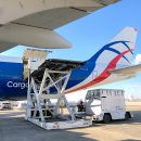 No hurdles for CargoLogicAir in transporting thoroughbreds US-Europe