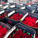 From Quito with roses: SkyCargo carriers Ecuadorian flowers to the world