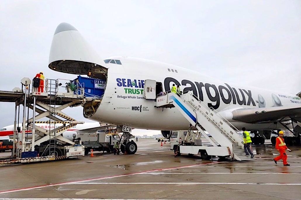 Cargolux gives Little Grey, Little White a lift to a new life