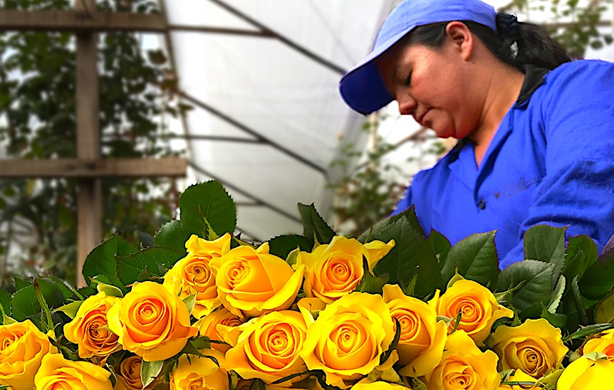 Air France KLM's Columbia ops FlowerWatch approved