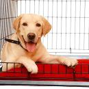Globe Air Cargo UK launches PetCare by ECS Group