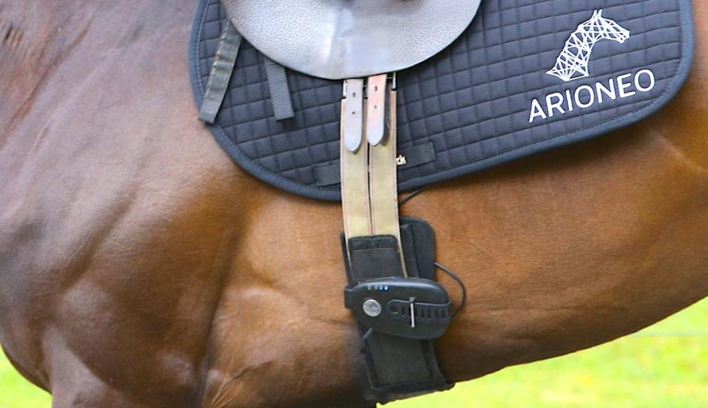 Animal Transport Assn partners with CHAMP, Arioneo